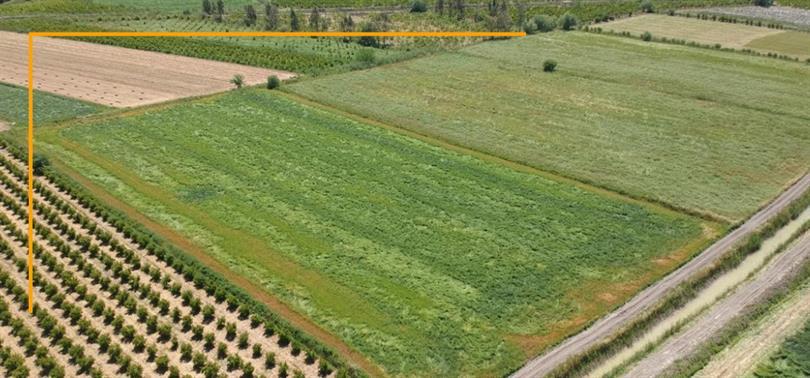 miras tarım